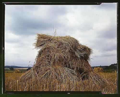 Come si forma il prezzo del grano