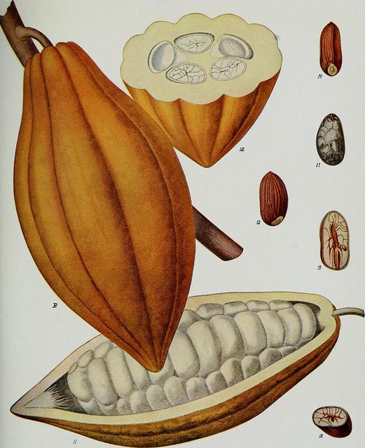 Come fare trading sul cacao